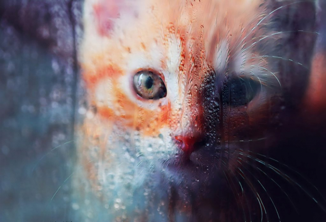 Sad Kitty Cat Stock Photo - stock photos and royalty-free images