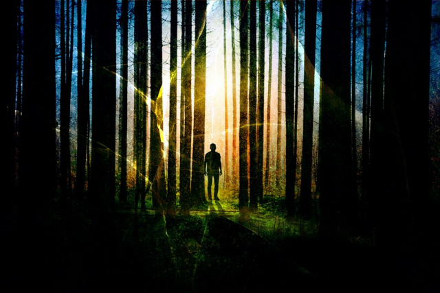 Surreal Apocalyptic Woods 01 - stock photos and royalty-free images
