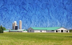 Large Modern Farm and Wheat Field Photo Montage